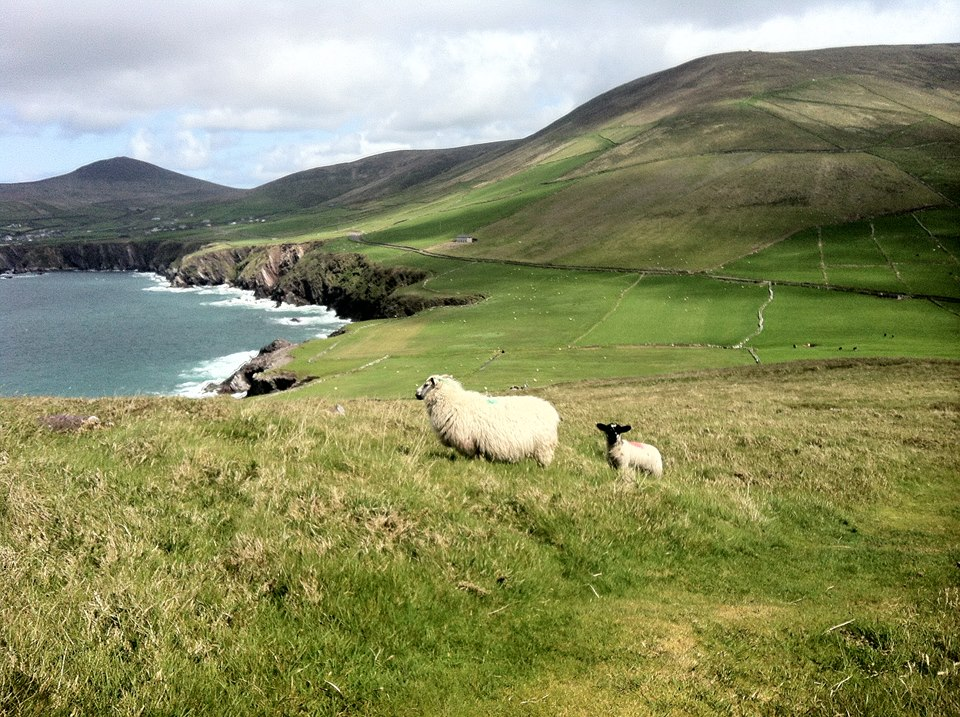 Une photo prise par Marine à Dingle