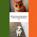 Les conditions pour amener son animal de compagnie en Irlande